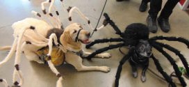 Halloween Contest for Canine Friends