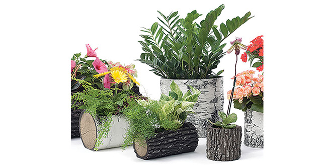 Natural Log Planters