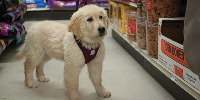 Hardware Store Aids Service Dog Recruits