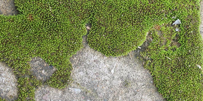 Beyond Grass: Other Options for Lawns