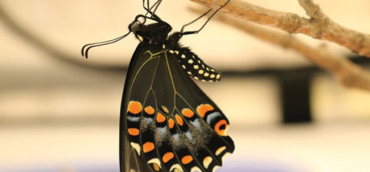 Butterfly Enthusiasts Flutter Into Hood's