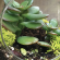 Terrarium Event a Hit With Customers