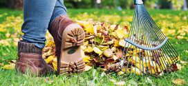 Top Tips for Customers Raking Leaves