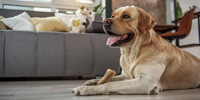 The Pet Dental Care Category Expands