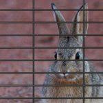 rabbit wire