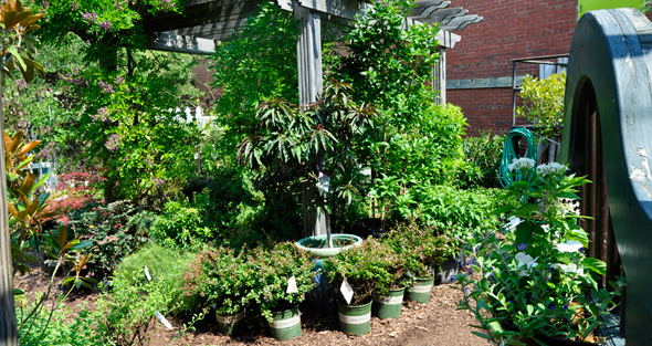 How to Increase Plant Sales - Feature