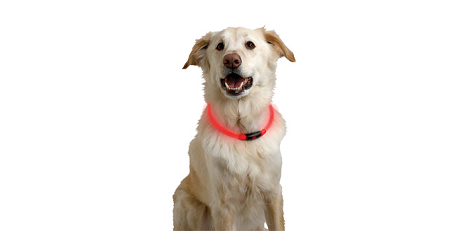 LED-Pet Collar
