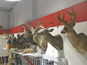 The hunting category stands out at Walker County Ace Hardware, with several mounted deer, turkey and other animals on display.