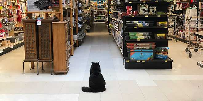 Cat, Flynn, Makes Himself at Home in Store
