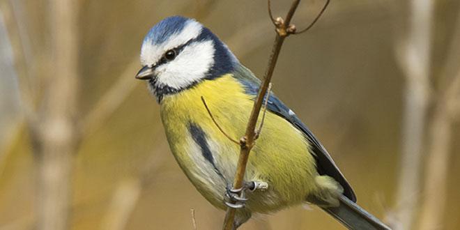 Gather Your Own Flock in the Birding Niche