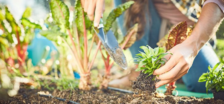 Become a Master Gardener to Boost Business and Knowledge