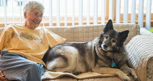 Aging Pets