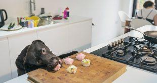 Pet-Friendly Kitchen